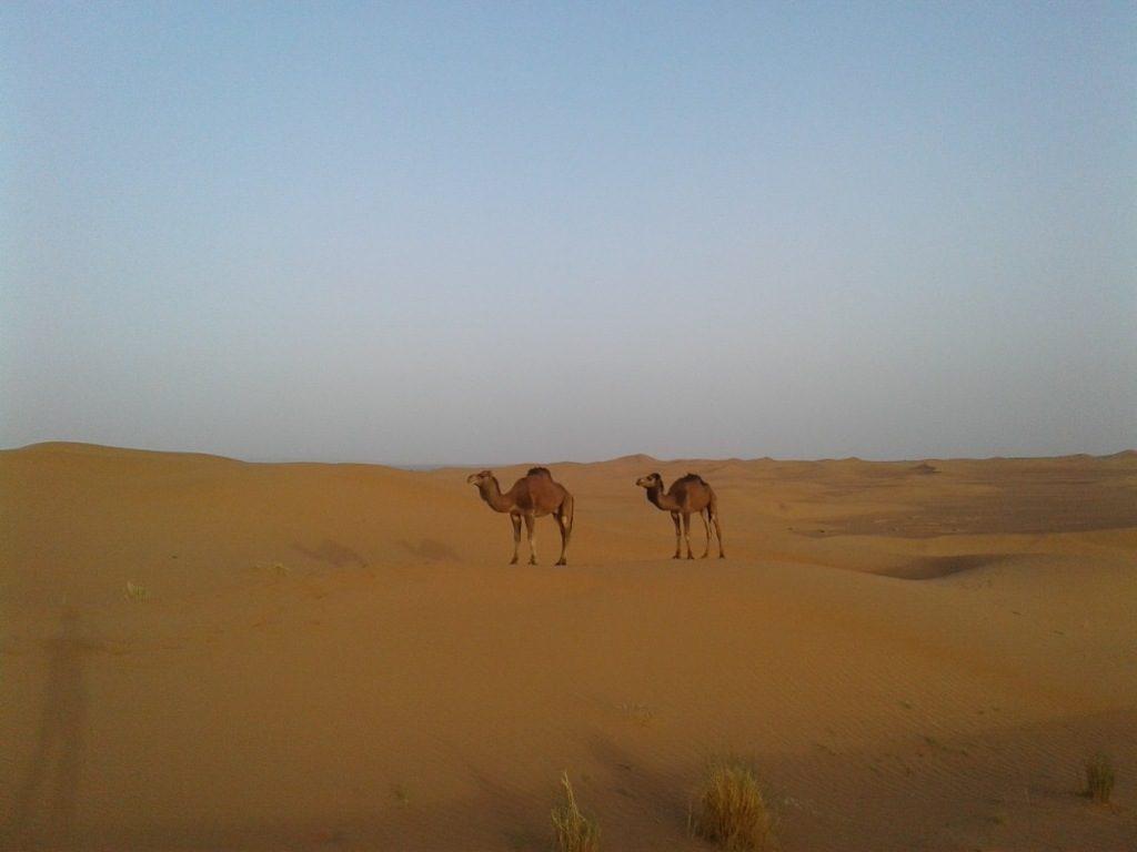 Chegaga, Trek au Maroc