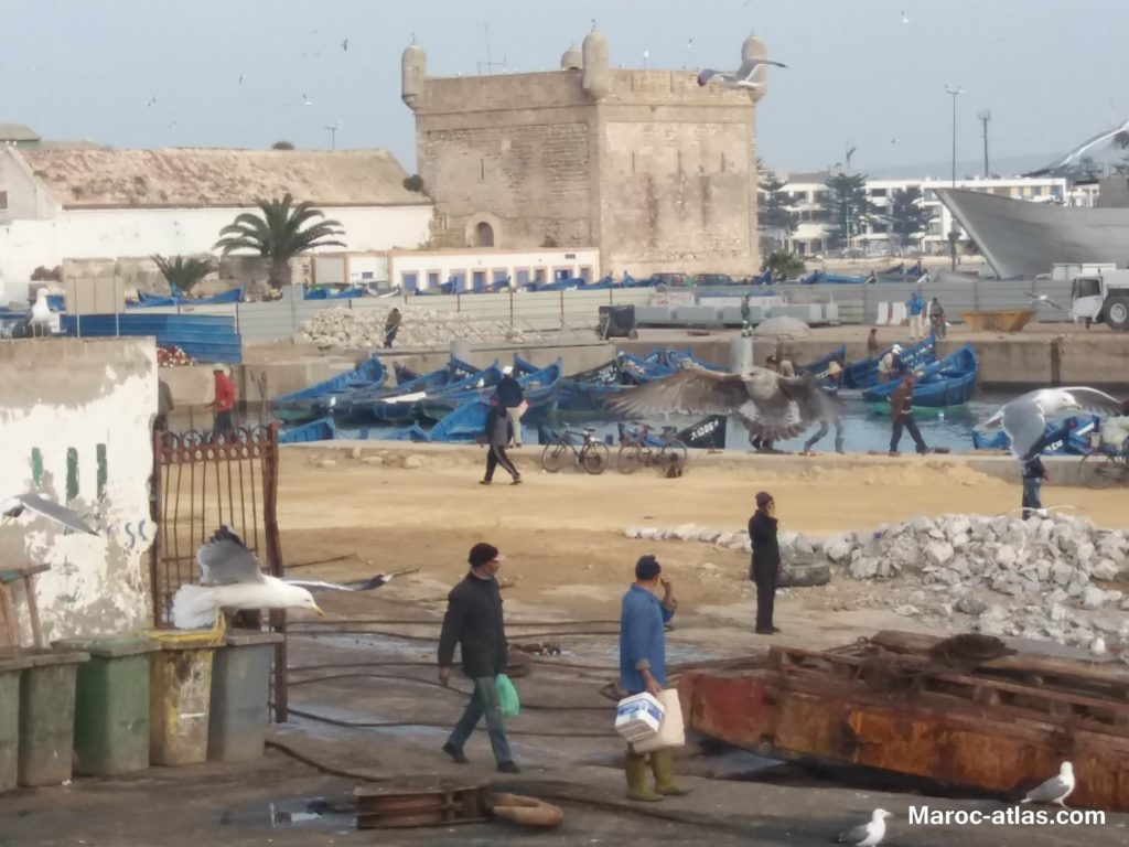 Maroc Atlas Port de pécheurs berbère d'Essaouira - Janvier 2018