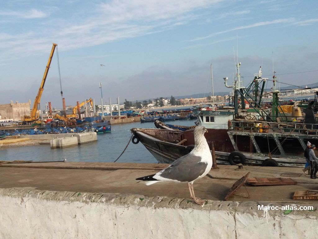 Maroc Atlas port sardinier d'Essaouira - Janvier 2018
