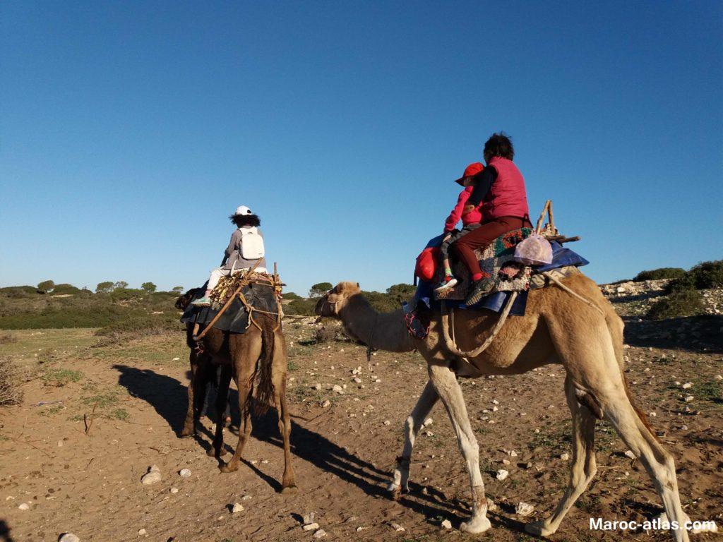 Randonnée à dot de dromadaire à Essaouira-Janvier2018